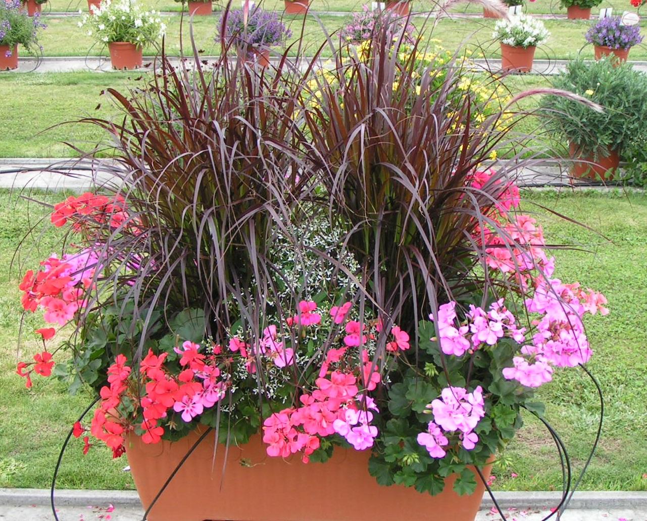 jardiniere geranium fashion designs. Black Bedroom Furniture Sets. Home Design Ideas