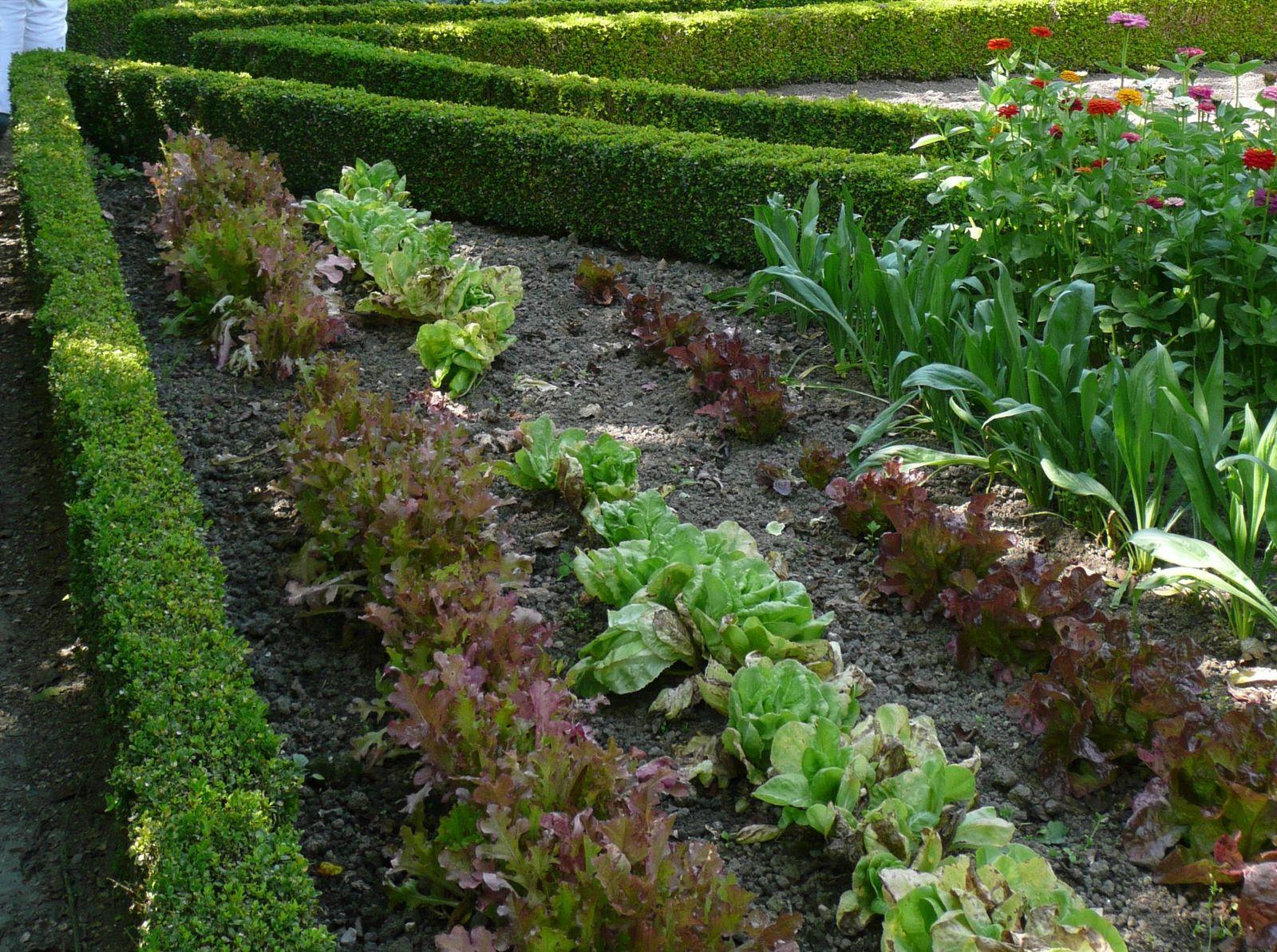 Comment semer et planter vos salades for Conseil plantation jardin